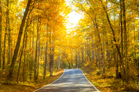 Yellow Tree Road